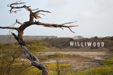 Williwood